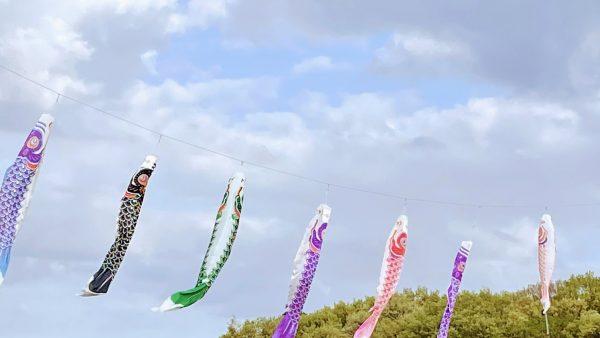 高野こいのぼり祭りの鯉のぼりの掲揚がスタート
