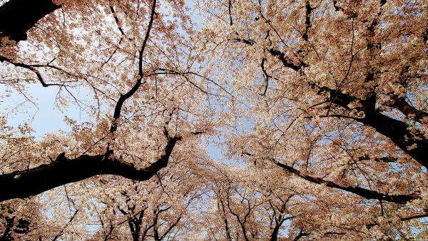 中村喜四郎衆議院議員から日本の政治史と政局感を教わる