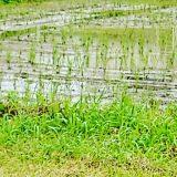 雨の中、農村部を戸別訪問